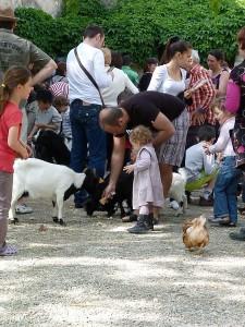 la nourriture des animaux
