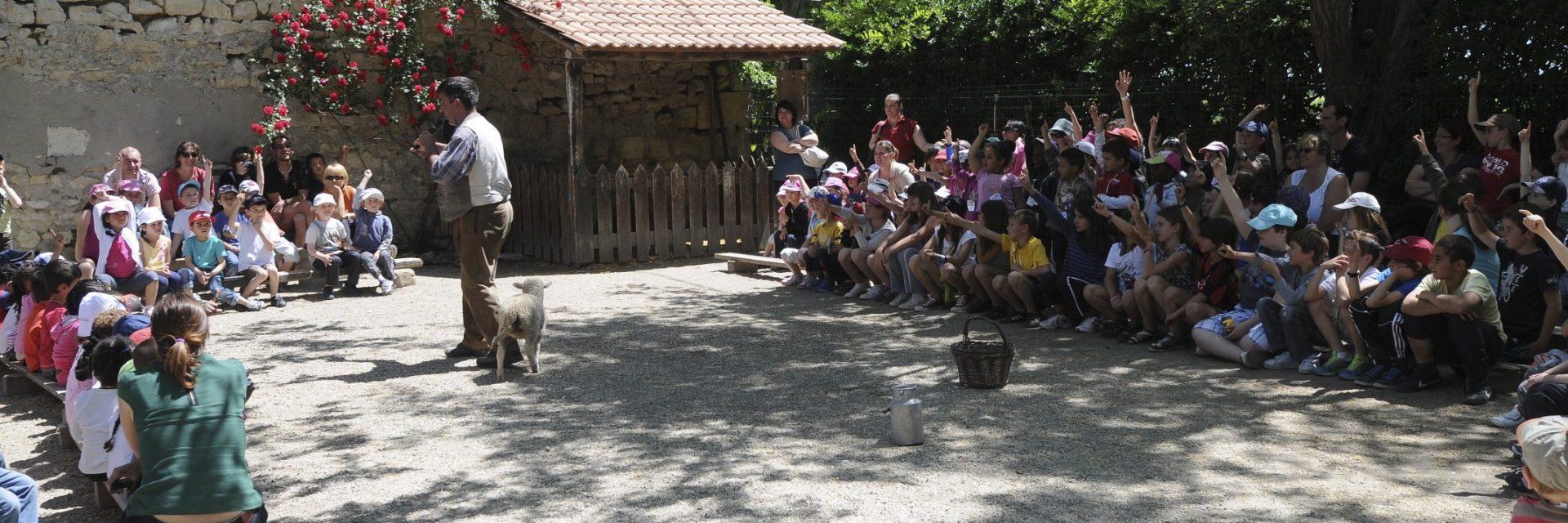 La tétée des agneaux